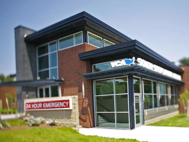vca south shore animal hospital the south shore magazine